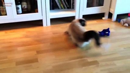 Funny Cat Jump Fail