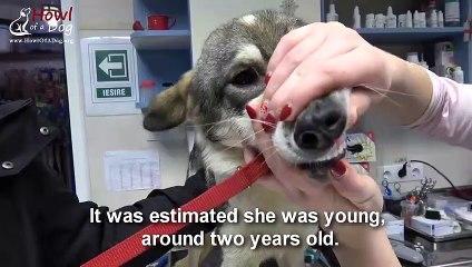 Ils sauvent un chien affamé et frigorifié... Histoire magnifique