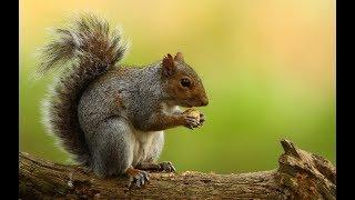 How to paint Acrylic on Canvas Fall Squirrel beginners tutorial LIVE