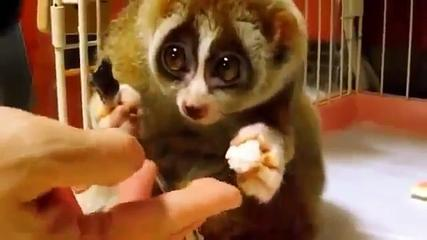 Funny Cute Animal Videos